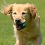 Distribución de cursos de Educador Canino