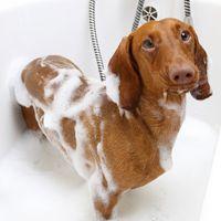 Distribución de cursos de Peluqueria y Estetica Canina